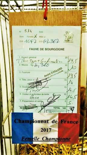 Femelle championne de france 2017 appartenant a frederic descamps 2