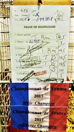 Male champion de france 2017 appartement a daniel geslot 2