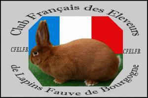 Club Français des Éleveurs de Lapins Fauve de Bourgogne